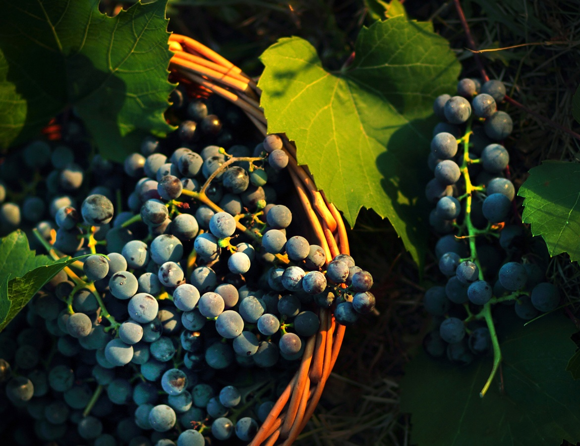 Winemaking Consulting